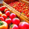 日本の防衛 〔ウイグル人のジェノサイド〕カゴメ、新疆産トマト使用中止 中国ネット反発「日本の全食品の輸入を止めよう」